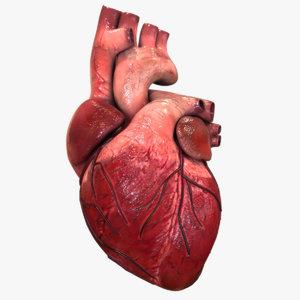 3d model heart anatomy