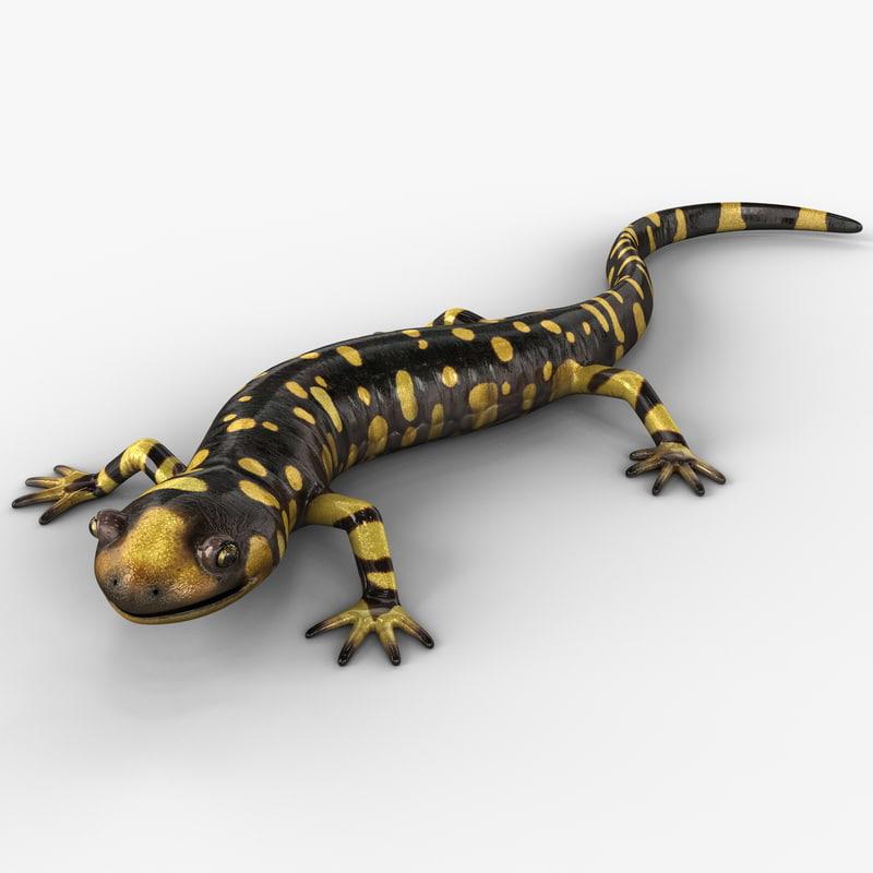 tiger salamander pose 2 3d model