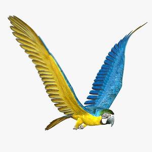 maya parrot animator 2