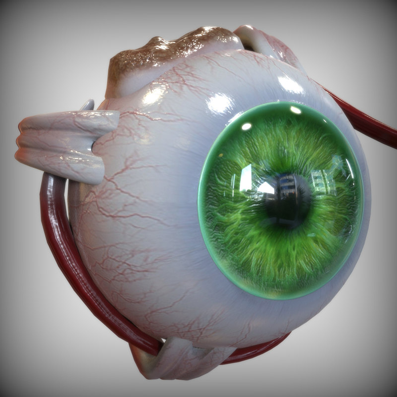 eye anatomy 3ds