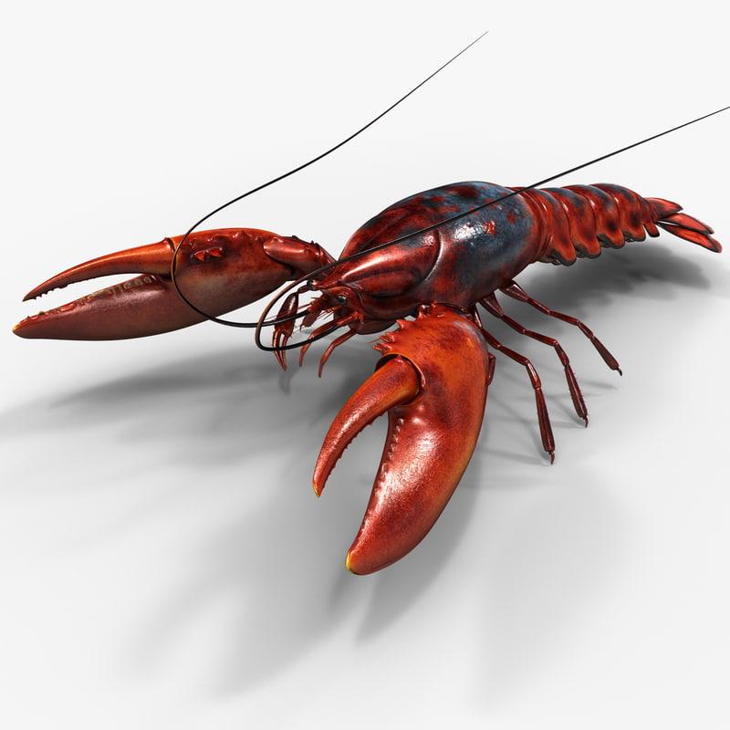 lobster 3d c4d