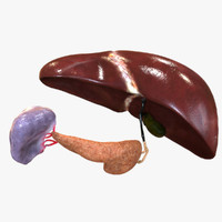 hepatic liver pancreas 3ds