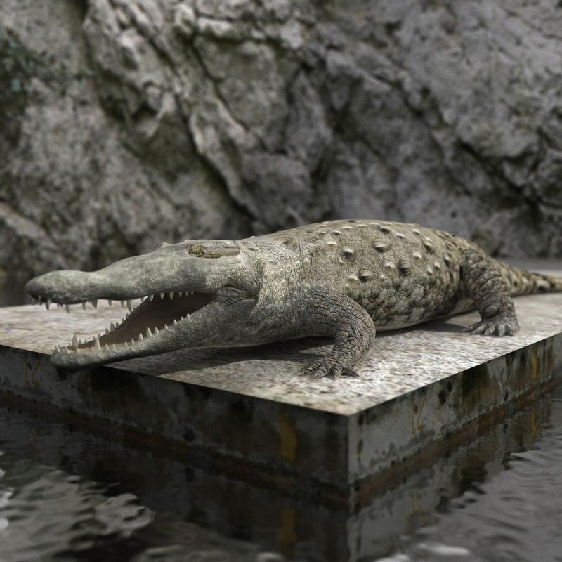 3d crocodile croc model