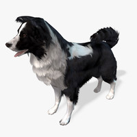 Real-Time Dog Border Collie