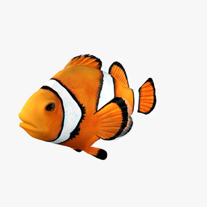 3d clownfish clown fish model