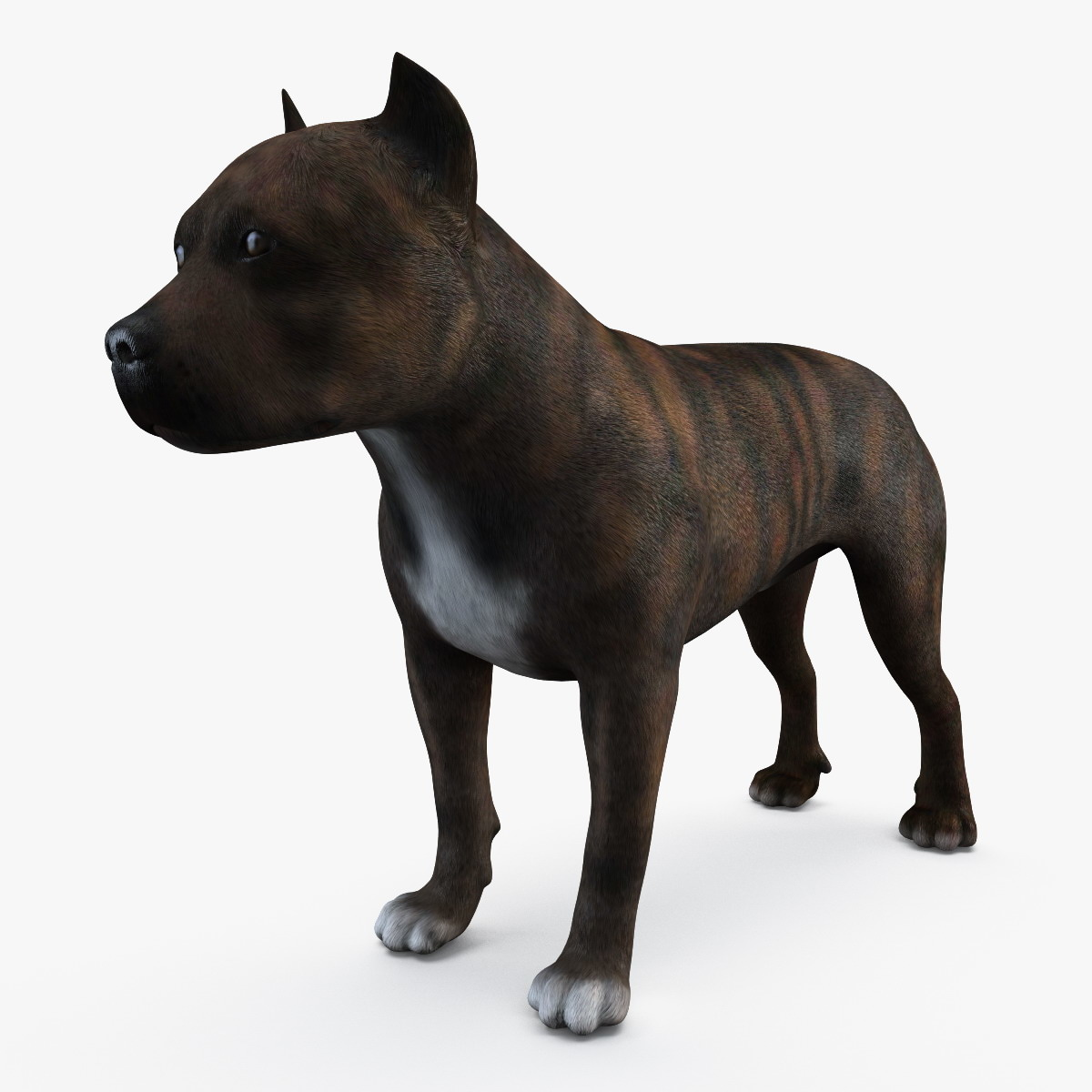 3d american staffordshire terrier