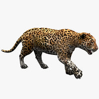 Jaguar Pose 1