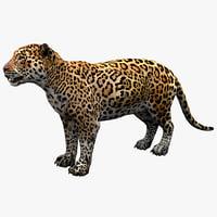 feline cat 3d max