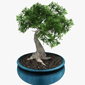 potted bonsai tree 3d 3ds