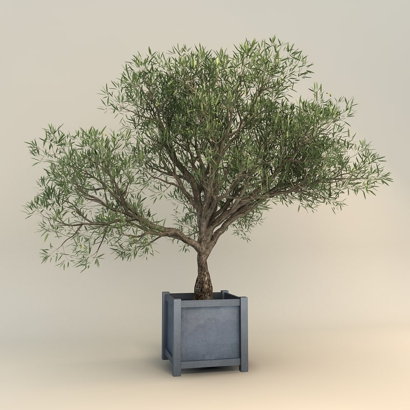 olive tree 3ds