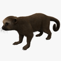 3d model kinkajou fur