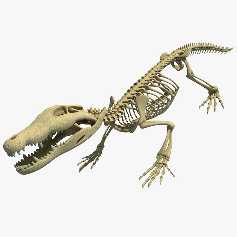 crocodile skeleton 3d max