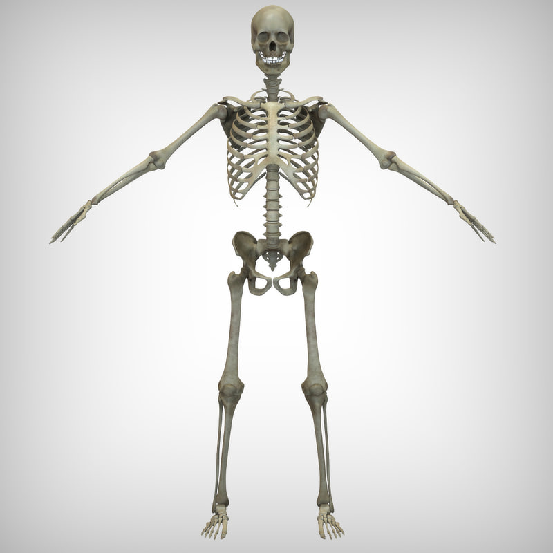 skeletal 3d 3ds