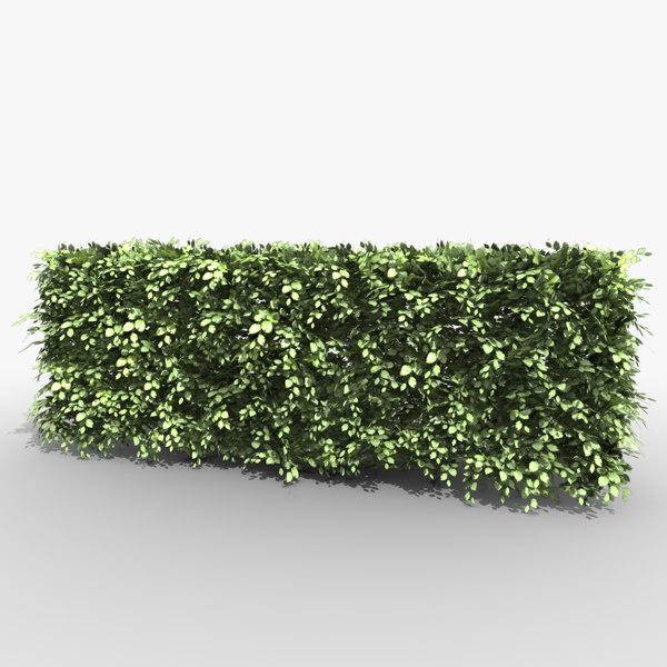 beech hedge 3d 3ds