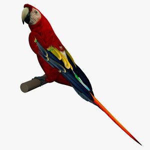 3d model scarlet macaw rigged bird
