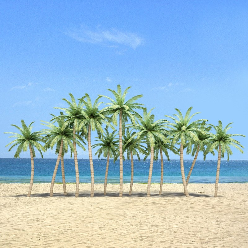 palm trees 3d max
