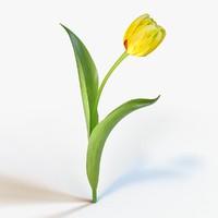 tulip petal leaf max
