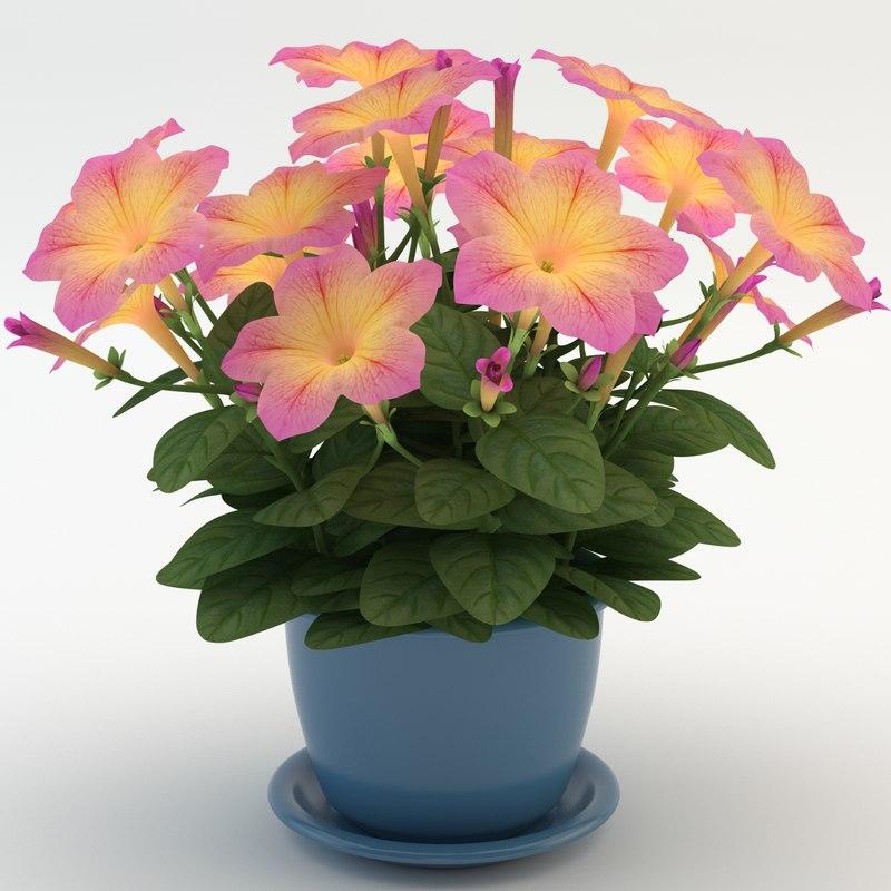 max petunia yellow