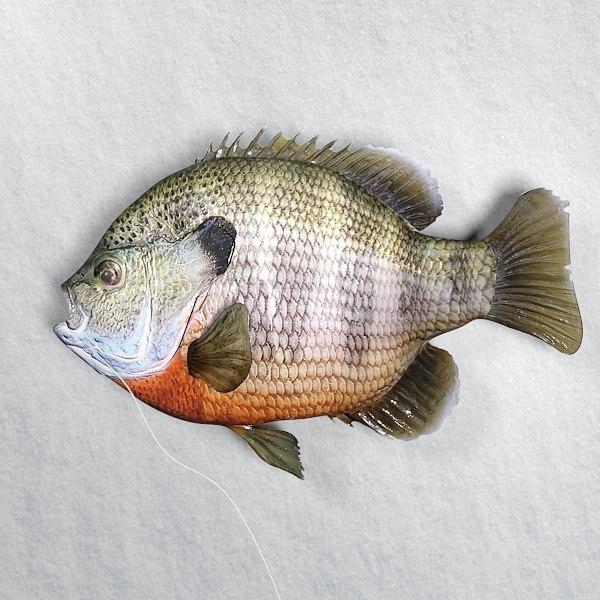 fish bluegill 3d max