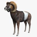Big Horned Ram 3D models