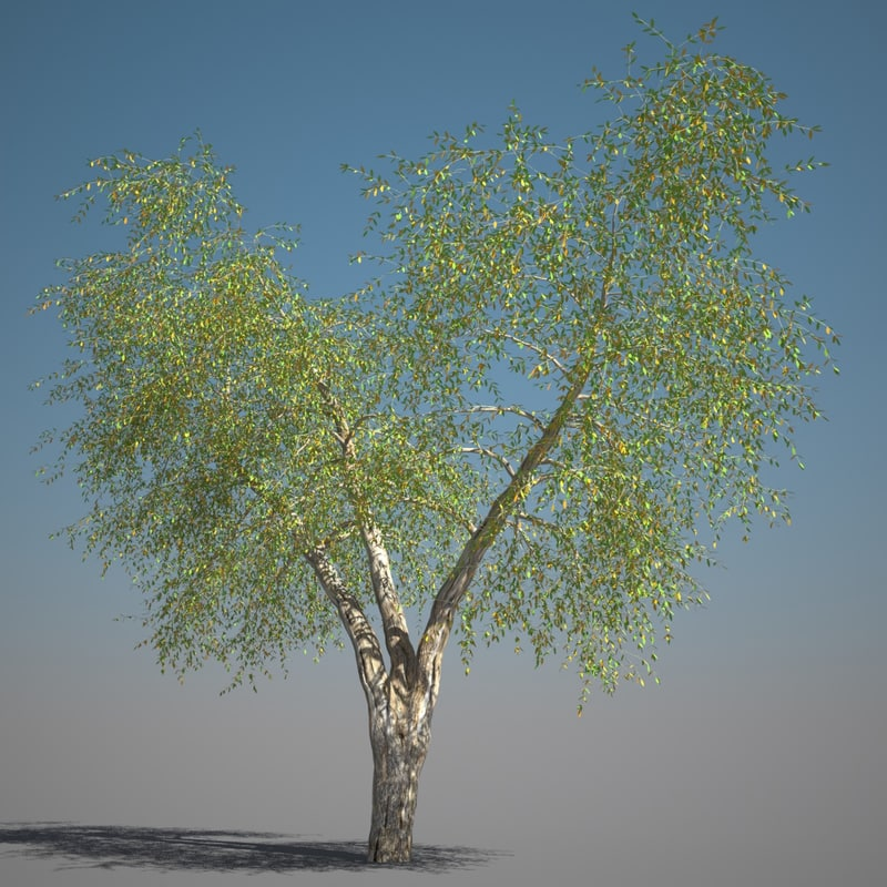 max realistic ash tree