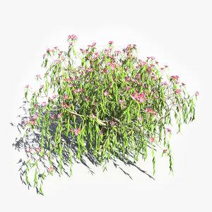 3ds realistic nerium oleander tree leaves