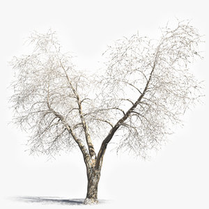 winter deciduous tree 3d model