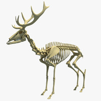max deer skeleton
