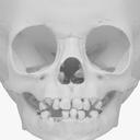 Child Skeleton 3D models