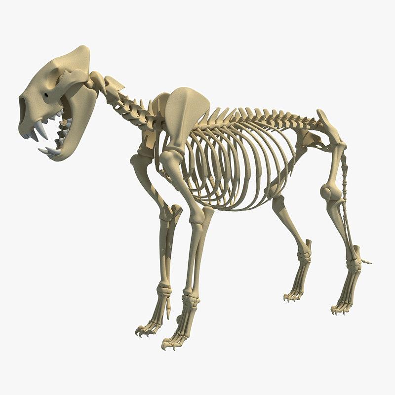 3d lion skeleton