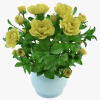 gardenia yellow 3d obj