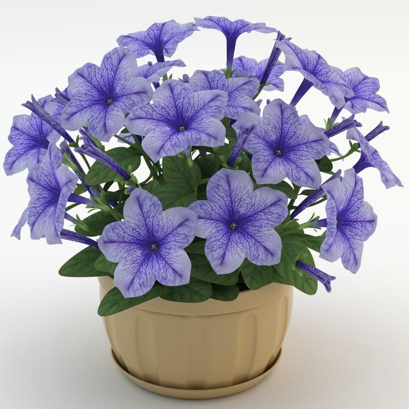 max petunia purple