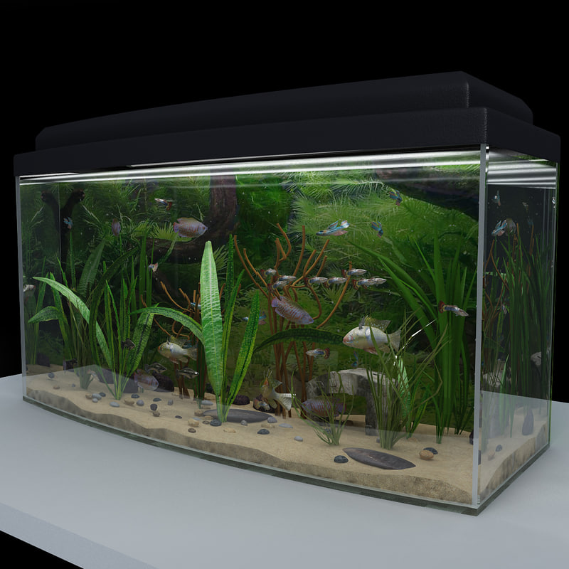 3d aquarium 2