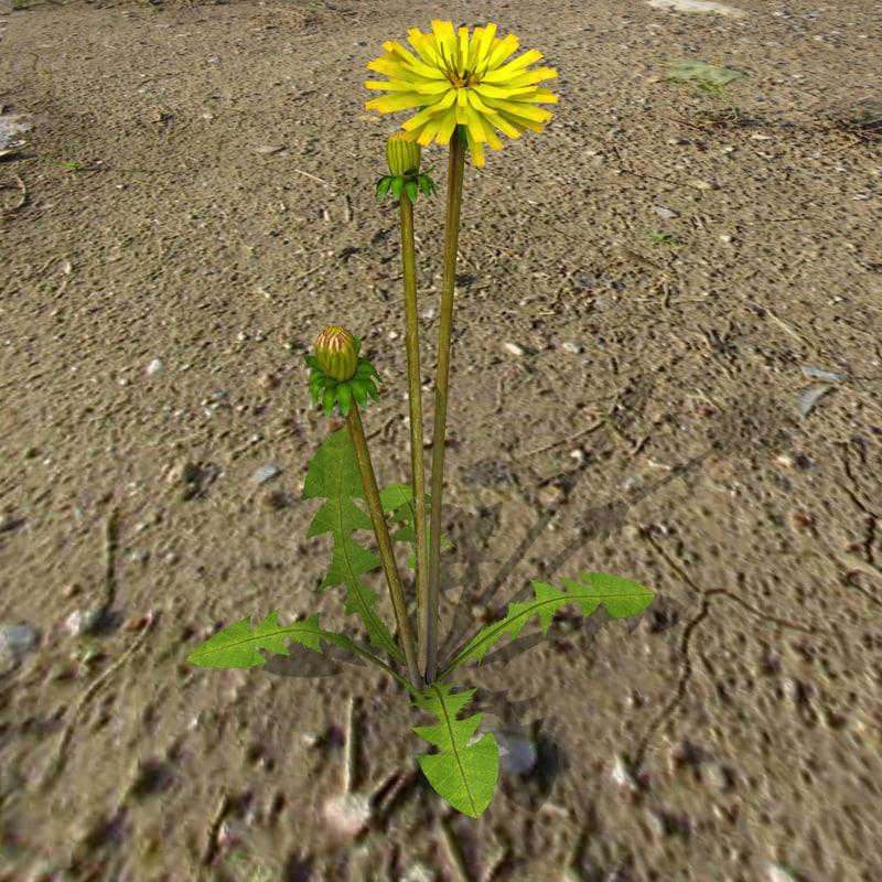 dandelion flower 3ds