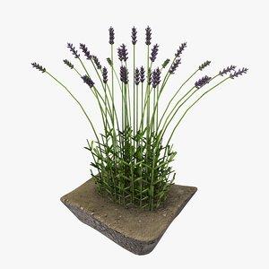 model of lavender bush