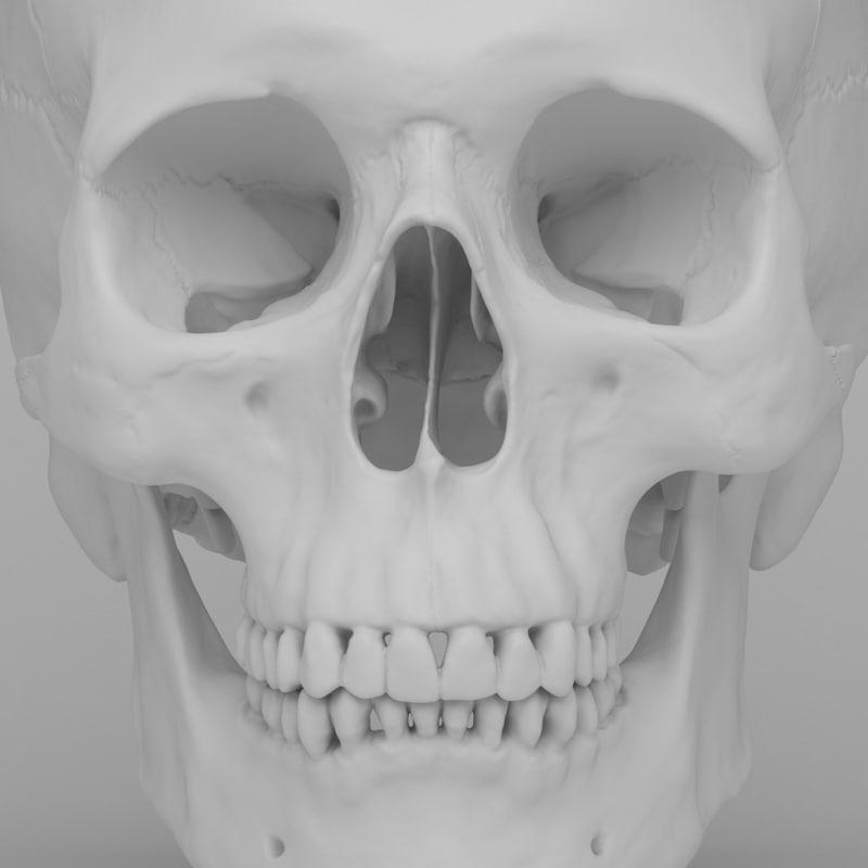 scan human skull jaw 3d model