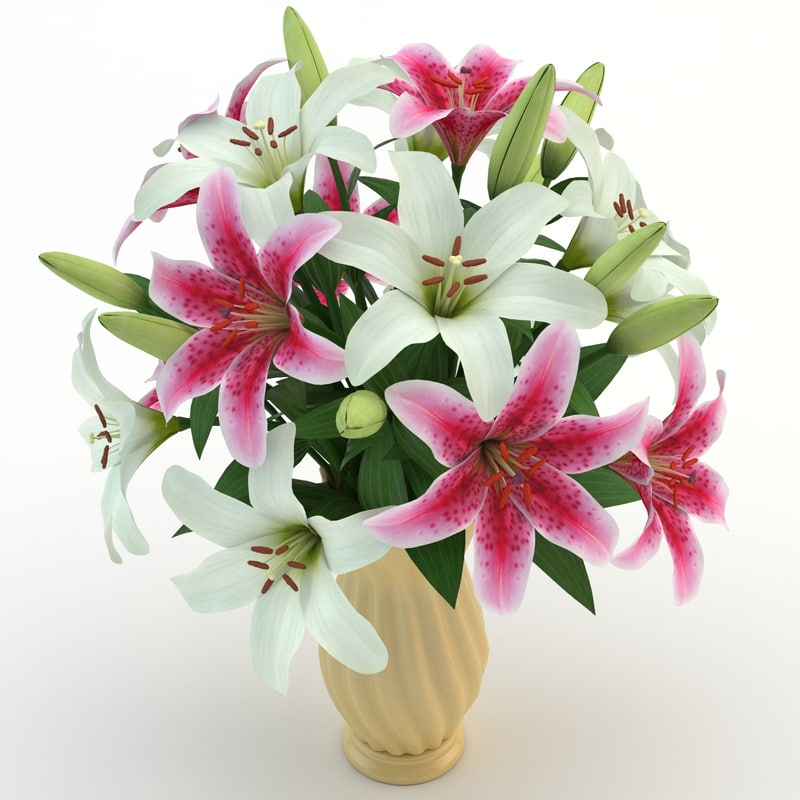lily colorful 3d max
