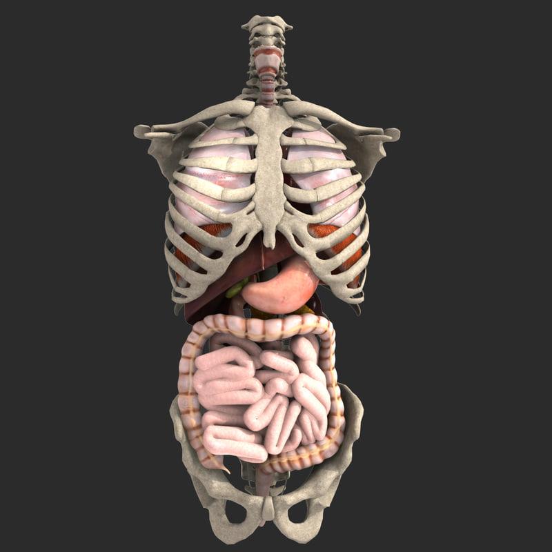 internal organs 3ds