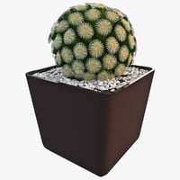 blooming mammillaria sphaerica 3d model