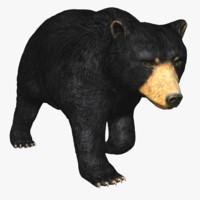 3d model american black bear