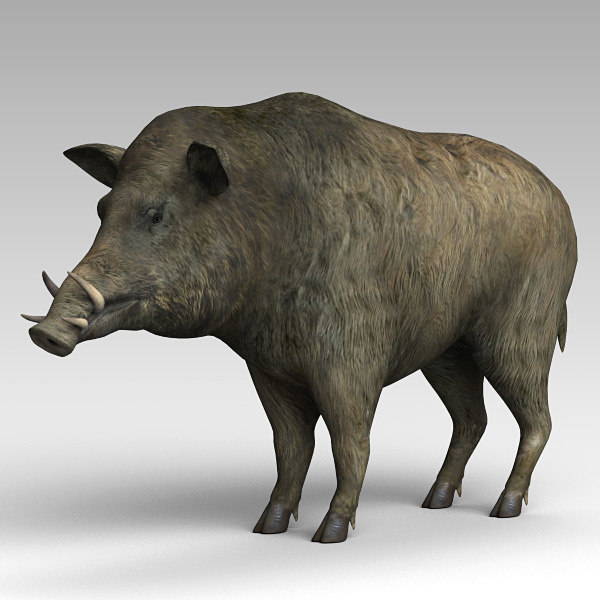 boar 3d max