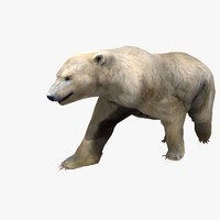 3d model polar bear rigged