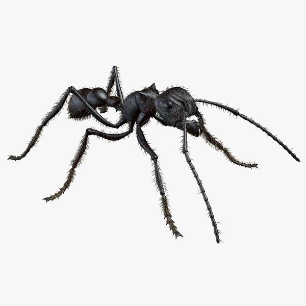bullet ant 3d model
