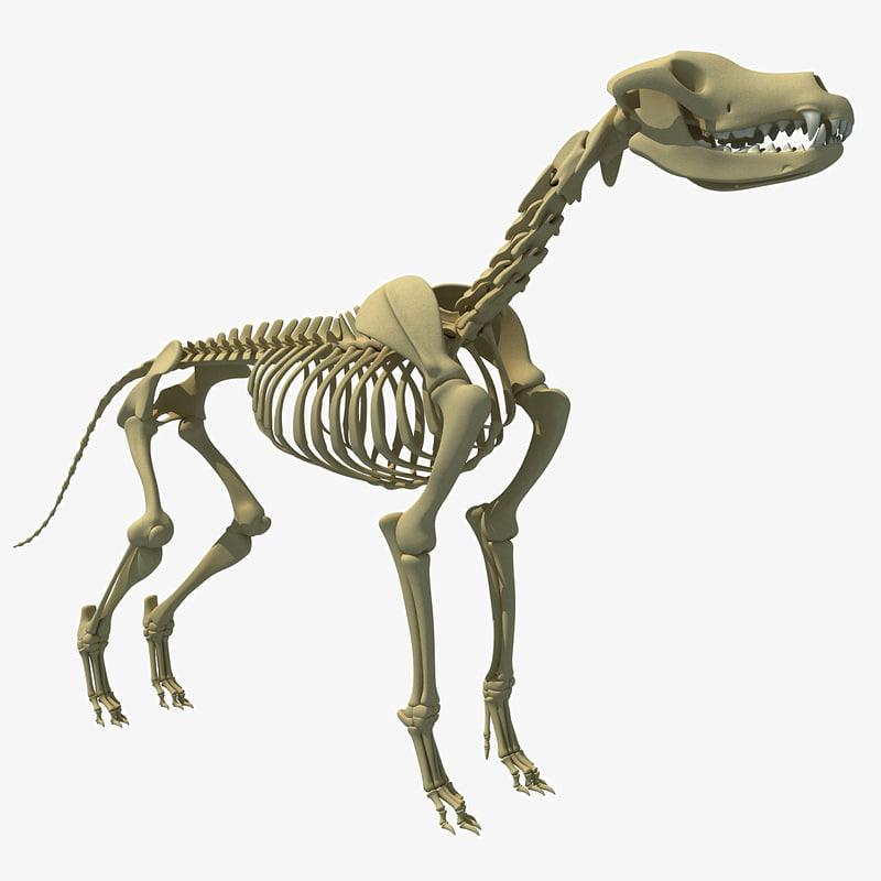 3ds dog skeleton