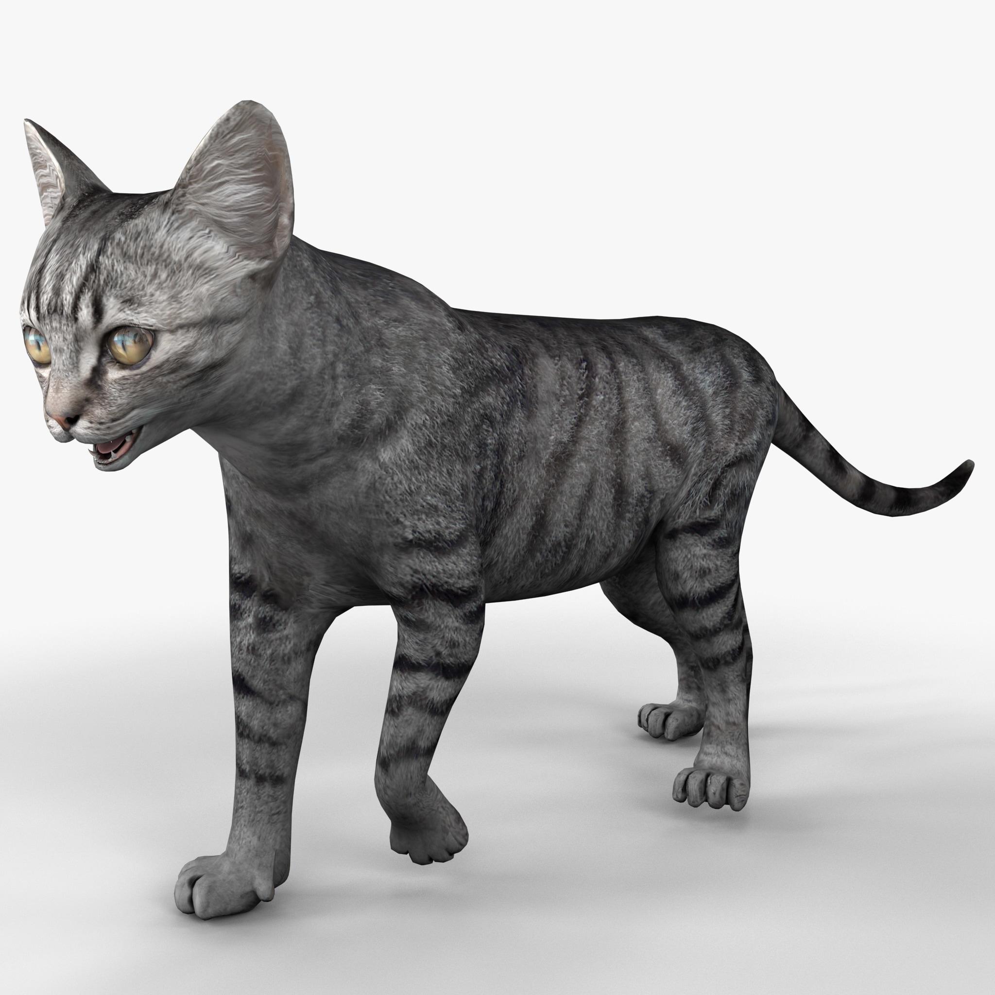 Cat 3 Pose 1_2.jpg