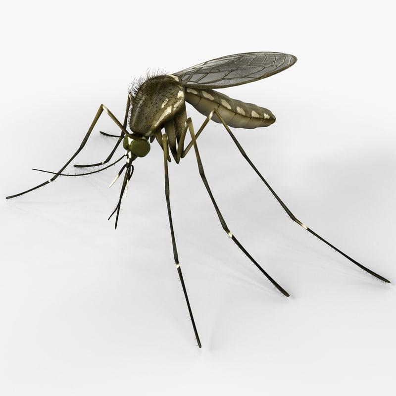 mosquito nature 3d model