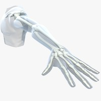 max skeleton upper limb