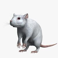 white rat obj
