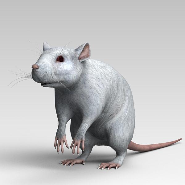 white rat obj