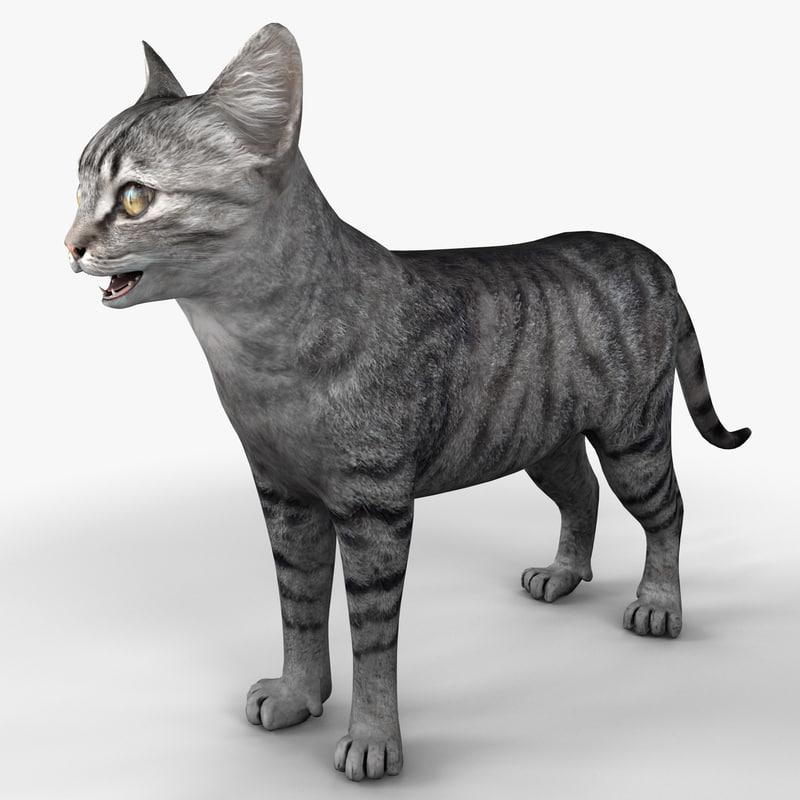 cat 3 rigged 3d model